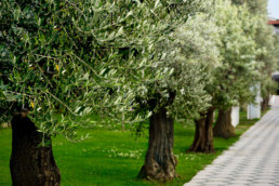 viale degli ulivi - villa la fenice